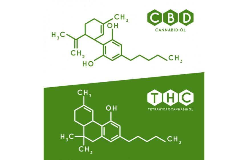 CBD et THC : 2 molécules cousines mais différentes