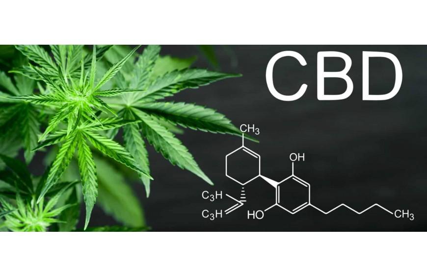CBD : quels sont les effets ?